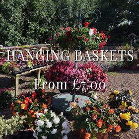 Garden centre in Leicester. Plant nursery Billesdon. Hanging baskets.